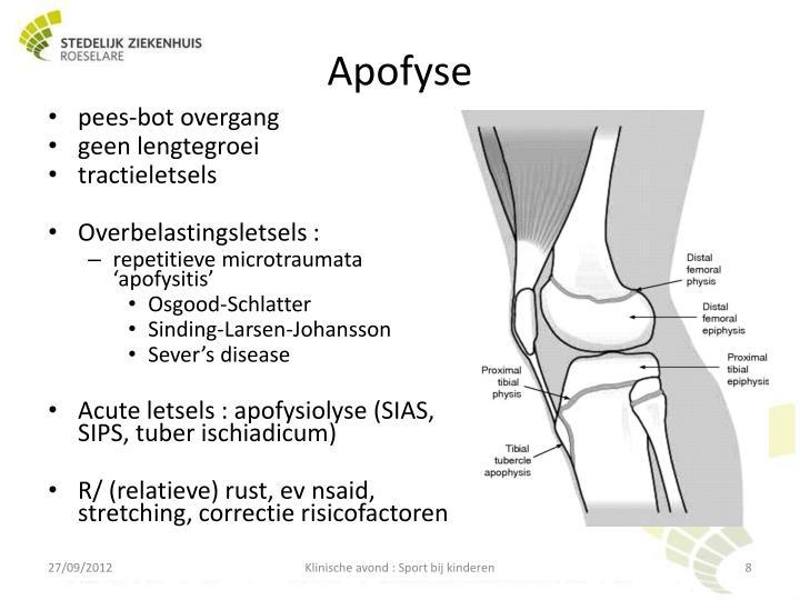 Apofyse