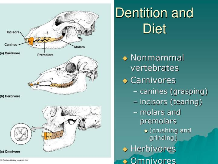 Dentition and Diet
