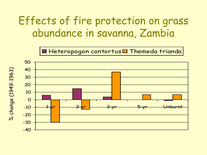 Effects of fire protection on grass abundance in savanna, Zambia