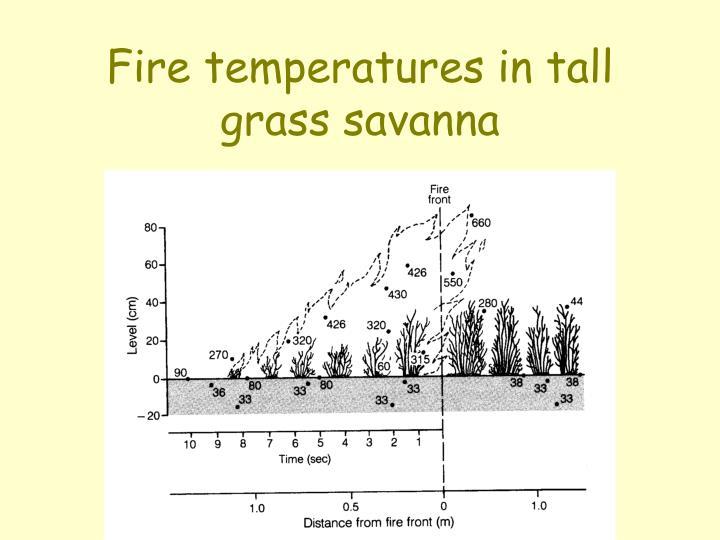 Fire temperatures in tall grass savanna