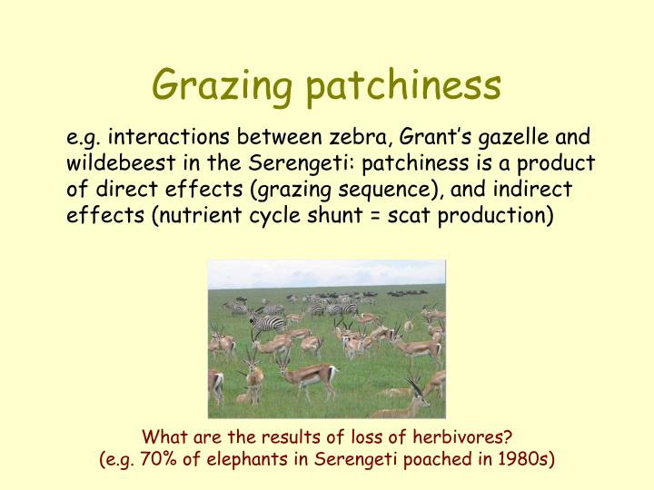 Grazing patchiness