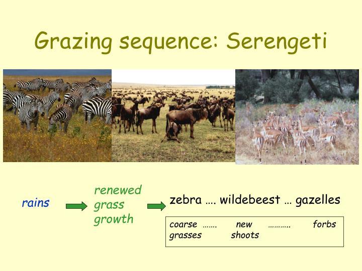 renewed grass growth