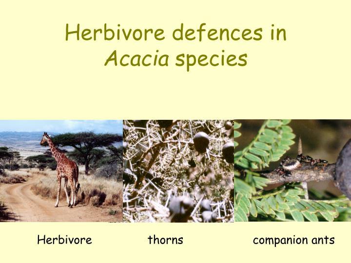 Herbivore defences in