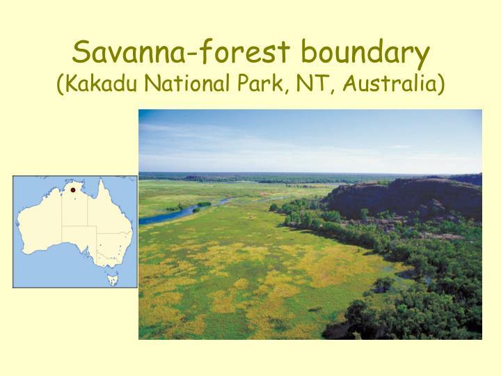 Savanna-forest boundary