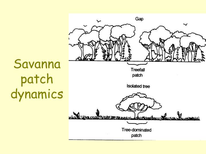 Savanna patch dynamics