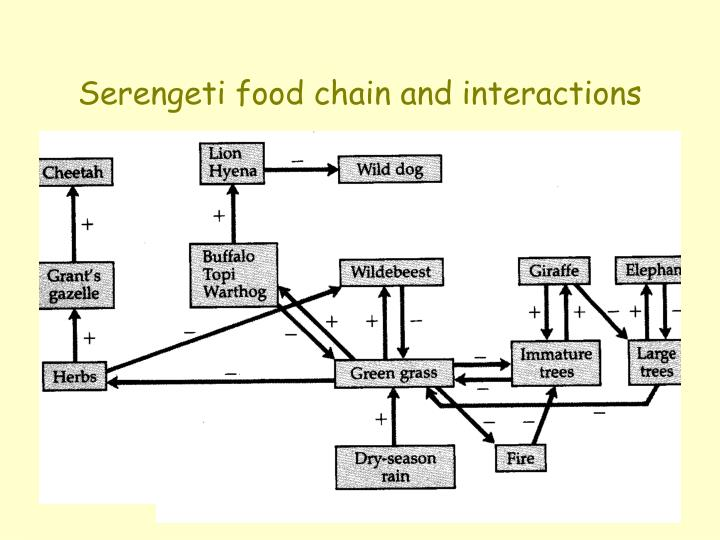Serengeti food chain and interactions