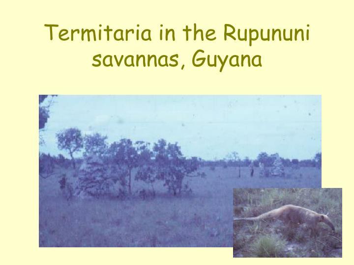 Termitaria in the Rupununi savannas, Guyana
