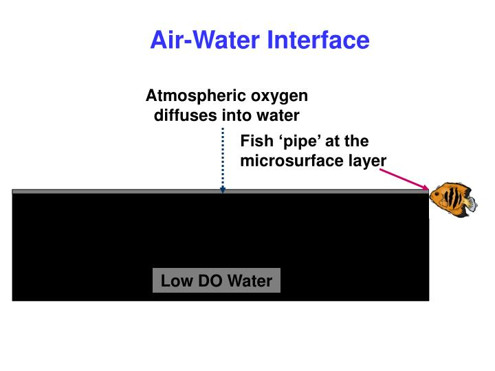 Air-Water Interface
