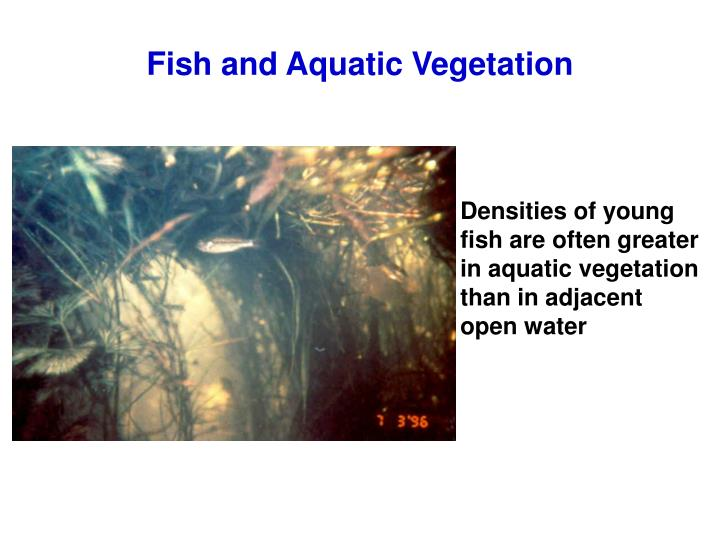 Fish and Aquatic Vegetation