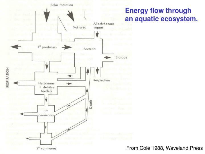 Energy flow through an aquatic ecosystem.