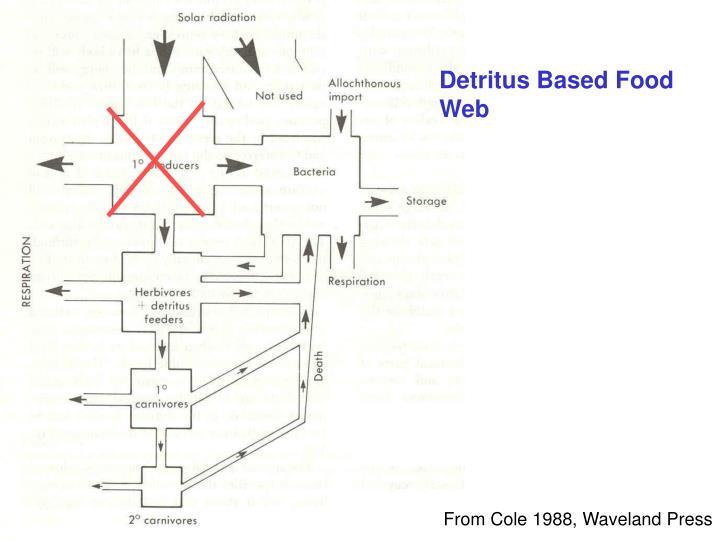 Detritus Based Food Web