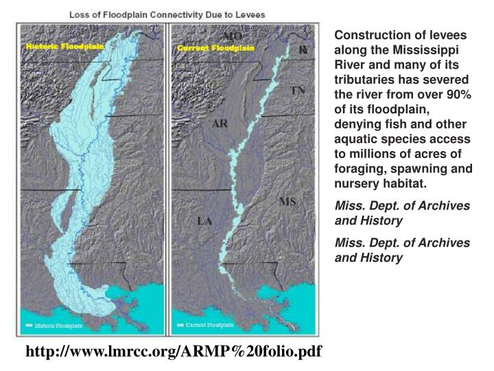 Construction of levees along the Mississippi River and many of its tributaries has severed the river...