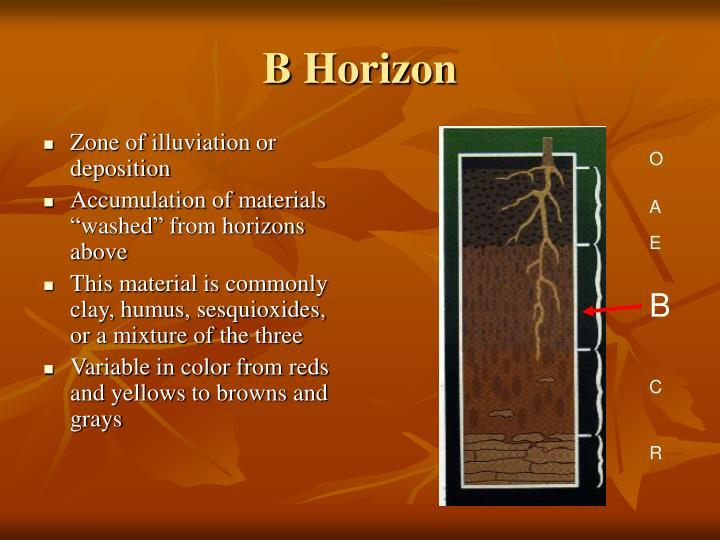 B Horizon