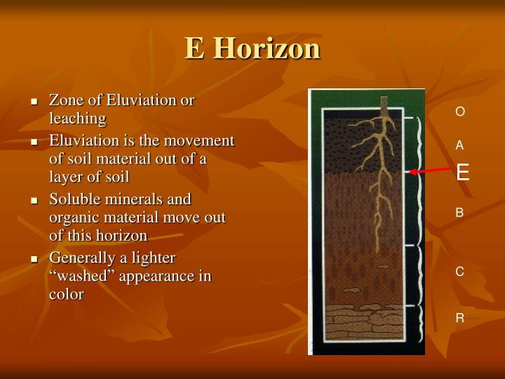 E Horizon