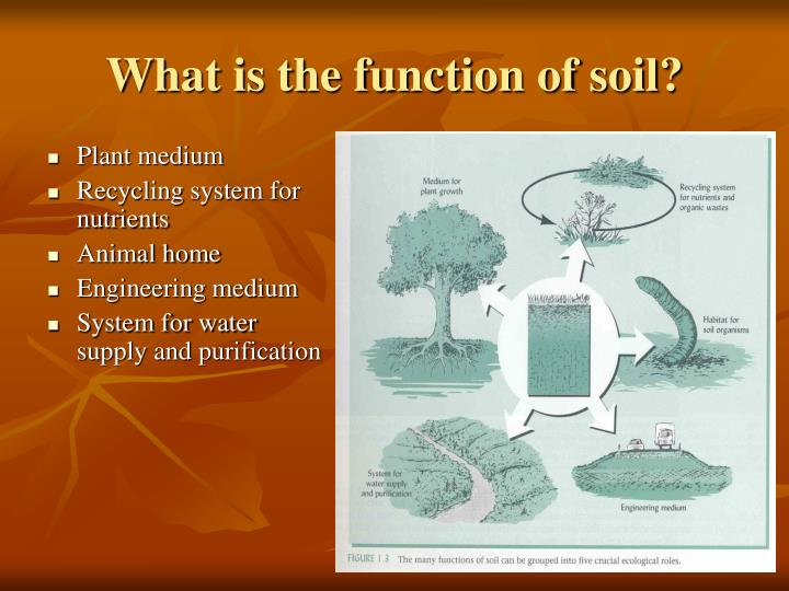 What is the function of soil?
