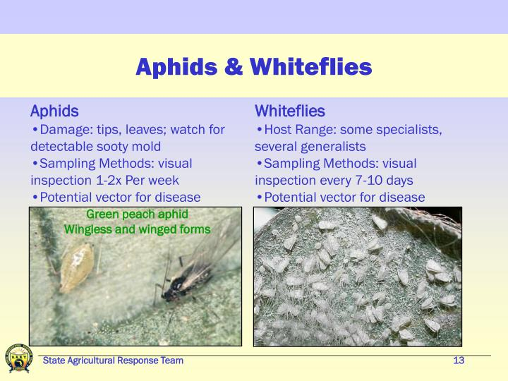 Aphids & Whiteflies