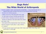 bugs rule the wide world of arthropods