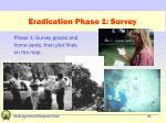 eradication phase 1 survey