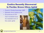 exotics recently discovered in florida brown citrus aphid