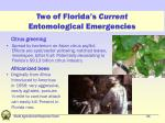 two of florida s current entomological emergencies