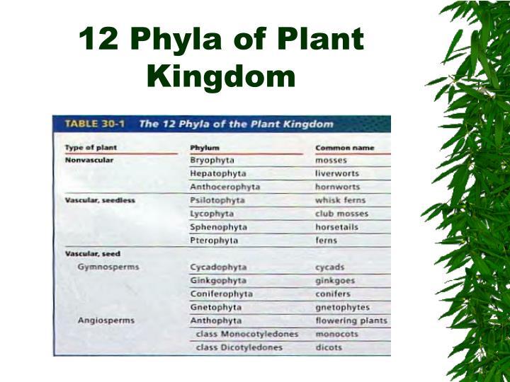 Ppt Kingdom Plantae Powerpoint Presentation Id 2969542