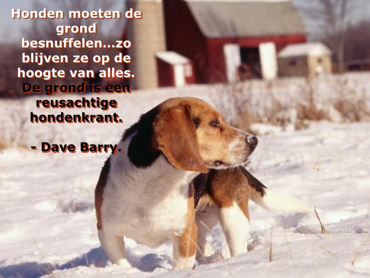 Honden moeten de grond besnuffelen…zo blijven ze op de hoogte van alles.
