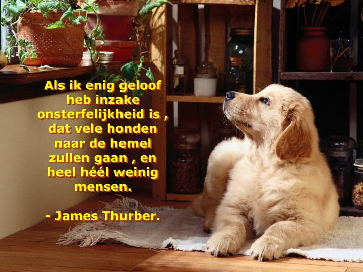 Als ik enig geloof heb inzake onsterfelijkheid is , dat vele honden naar de hemel zullen gaan , en heel héél weinig mensen.