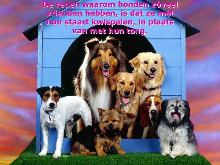 De reden waarom honden zóveel vrienden hebben, is dat ze met hun staart kwispelen, in plaats van met hun tong.