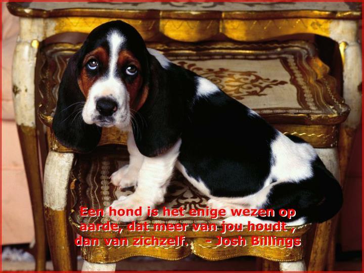 Een hond is het enige wezen op aarde, dat meer van jou houdt , dan van zichzelf.    - Josh Billings