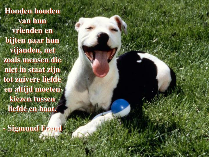 Honden houden van hun vrienden en bijten naar hun vijanden, net zoals mensen die niet in staat zijn tot zuivere liefde en altijd moeten kiezen tussen liefde en haat.