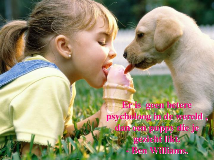 Er is  geen betere psycholoog in de wereld , dan een puppy die je gezicht likt.