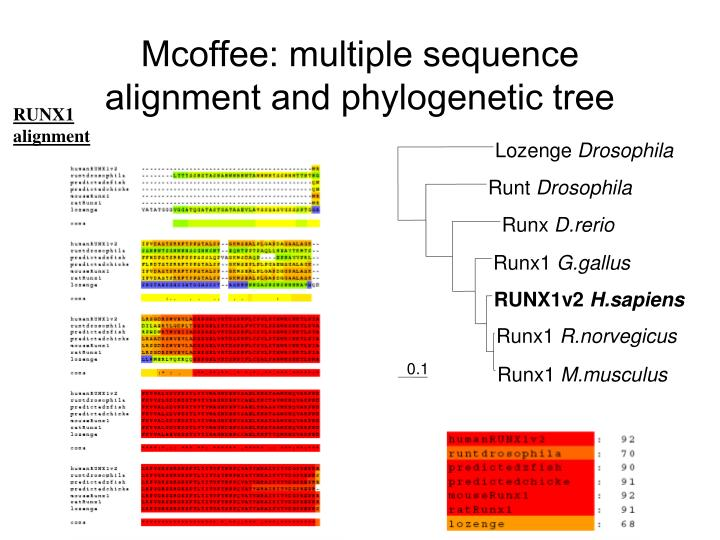 Mcoffee multiple sequence alignment and phylogenetic tree