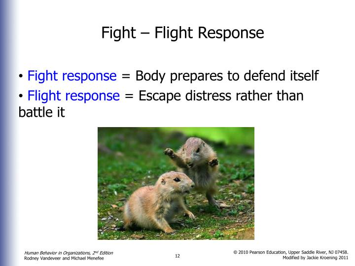 Fight – Flight Response