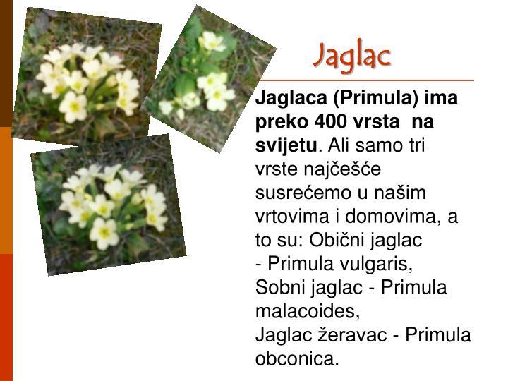 Jaglac