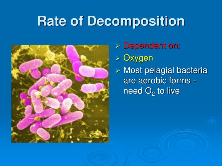 Rate of Decomposition