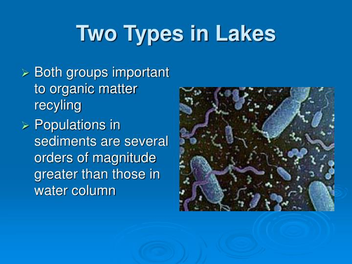 Two Types in Lakes