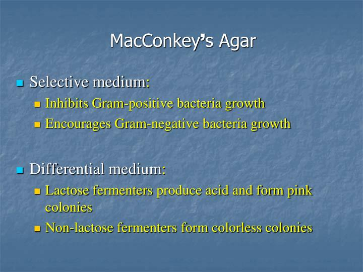 MacConkey