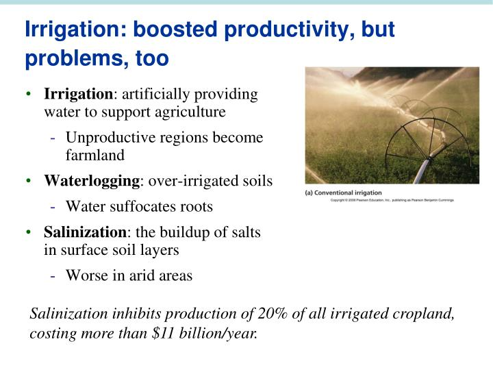 Irrigation: boosted productivity, but problems, too