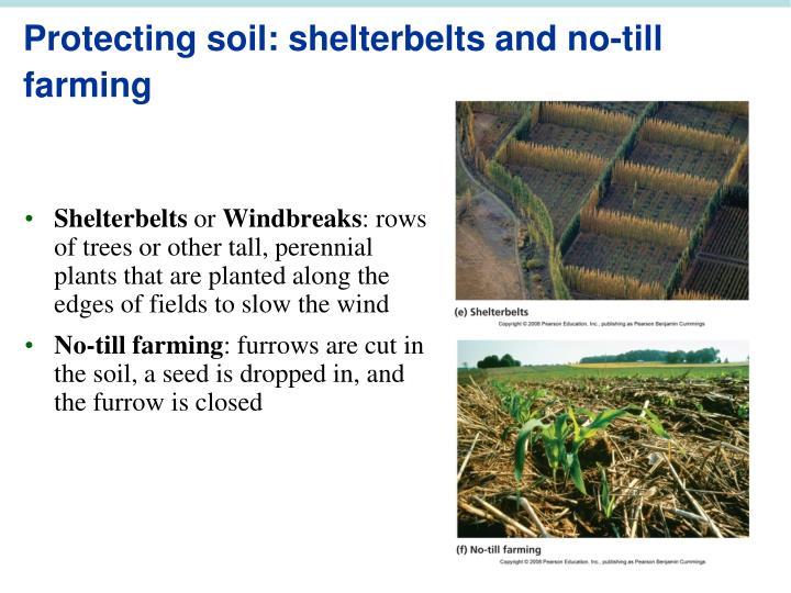 Protecting soil: shelterbelts and no-till farming