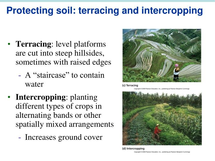 Protecting soil: terracing and intercropping