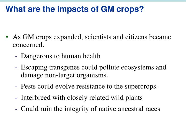 What are the impacts of GM crops?