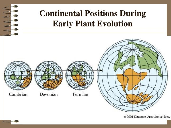 Continental positions during early plant evolution