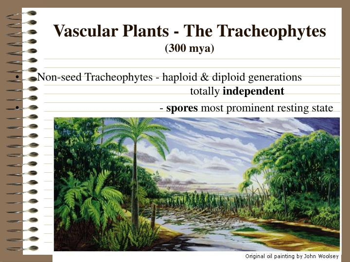 Vascular Plants - The Tracheophytes