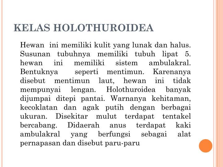 KELAS HOLOTHUROIDEA