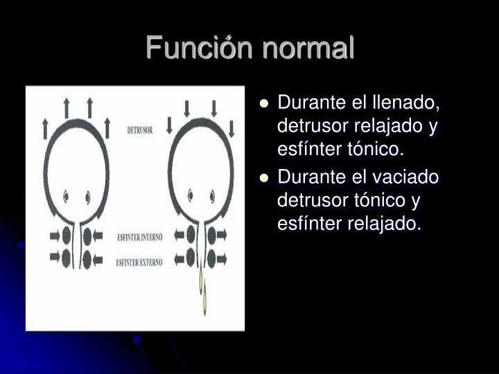 Función normal