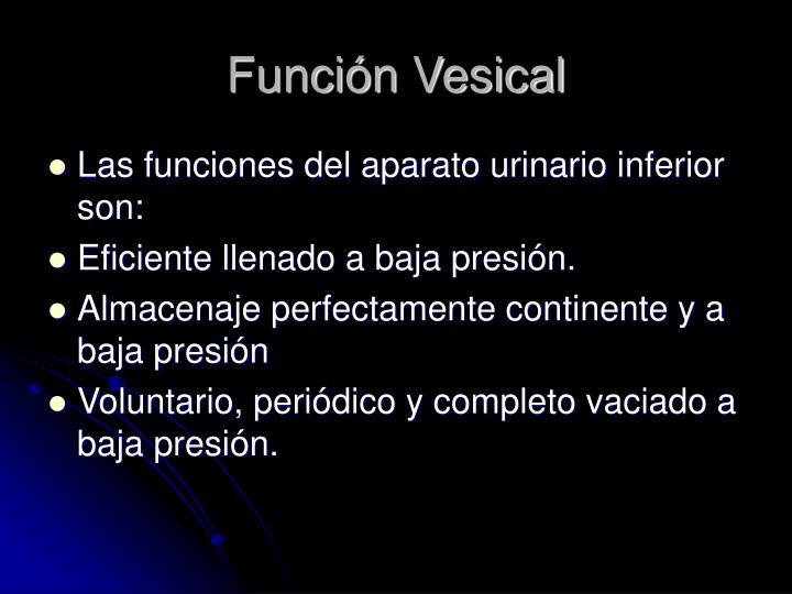 Función Vesical