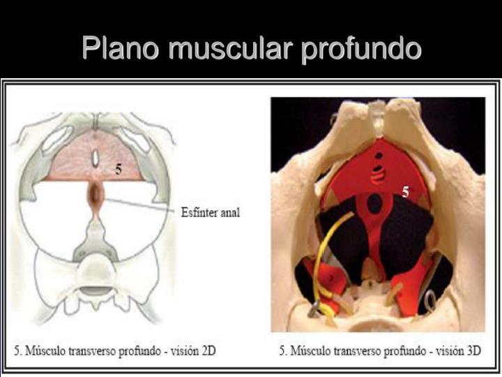 Plano muscular profundo