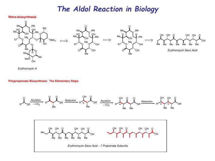 The Aldol Reaction in Biology
