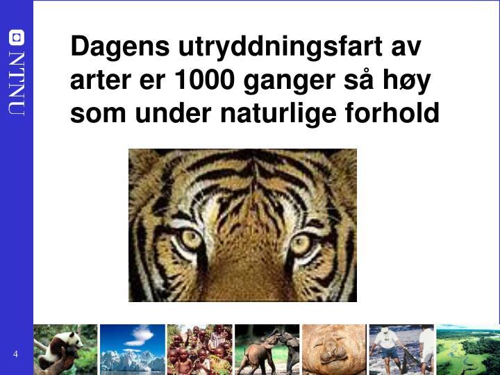 Dagens utryddningsfart av arter er 1000 ganger så høy som under naturlige forhold