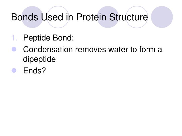 Bonds Used in Protein Structure